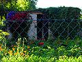 Ogród wieś nadmorska Kierzkowo.JPG