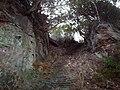 Old Stairway - geograph.org.uk - 131241.jpg