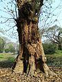 Old tree stem.jpg