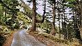 On the way to Pirin - panoramio.jpg