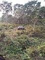 One Horned Rhino Chitwan National Park.jpg
