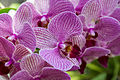 Orchideen (25689975611).jpg
