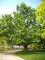 Orléans - jardin des plantes (05).jpg