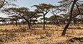 Oromia IMG 5510 (24931426847).jpg