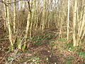 Osierbed Wood - geograph.org.uk - 312422.jpg