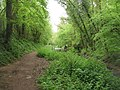 Overgrown towpath - geograph.org.uk - 1295993.jpg