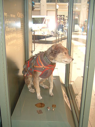 Owney (dog) - Owney's preserved body is on display at the Smithsonian National Postal Museum (NPM) in Washington, D.C.
