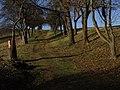 PR Slavičí údolí - alej na severním okraji rezervace (k Lochkovu) (3).jpg