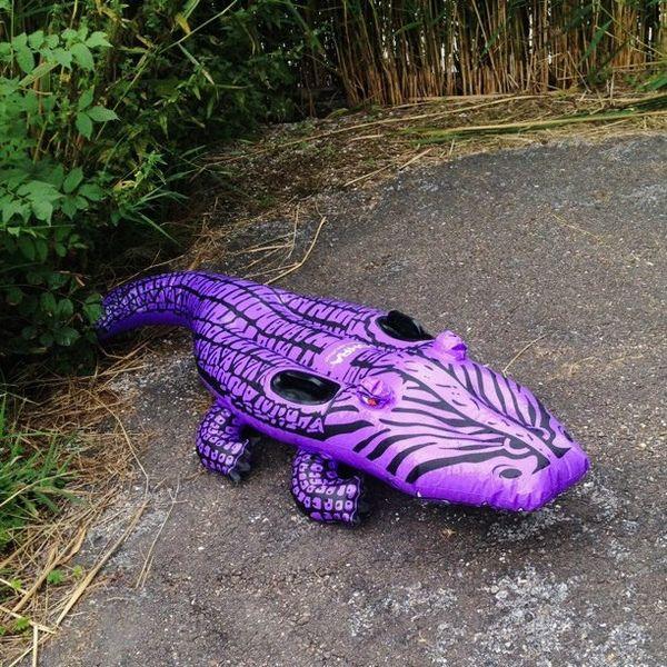 File:Paarse krokodil.jpg