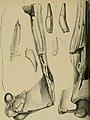 Palaeontographica (1846) (14577418719).jpg