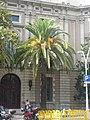 Palau Casades - palmera P1460867.jpg