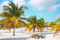 Palm trees on the sand of the Sirena beach at Cayo Largo.jpg