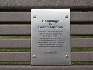 Great Antonio - Plaque on bench, dedicated to The Great Antonio