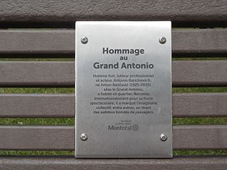 Great Antonio - Plaque on bench, dedicated to The Great Antonio