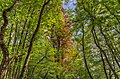 Parc Vouillants Erable Jungle.jpg