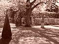 Park francuski przy pałacu w Rogalinie.jpg