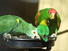 Parrots -Palmitos Park -Gran Canaria -three species-8a.jpg