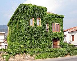 Stone house covered with Boston ivy in Thouria