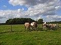 Pasture, Great Kingshill - geograph.org.uk - 936273.jpg
