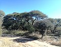 Path in National Botanical Gardens Botswana 4.jpg