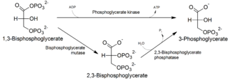 2,3-Bisphosphoglyceric acid - Image: Pathway of generation of 2,3 bisphosphoglycerate
