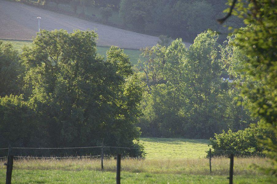 Paysage printanier, La Celle Sur Nièvre, Nièvre, France