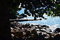 Pedras e árvores.jpg