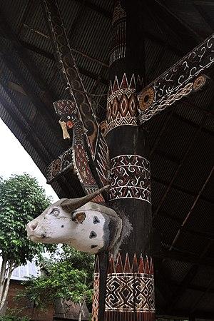 West Sulawesi - Image: Pigaf elat 160315 0078 mms
