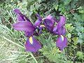 PikiWiki Israel 30788 Plants of Israel.jpg