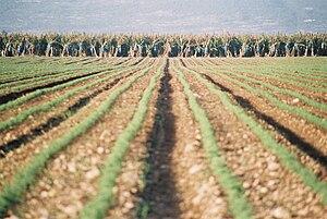 Sa'ar - Image: Piki Wiki Israel 3601 Geography of Israel