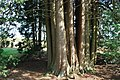 Pinetum Vinkennest (25363459659).jpg