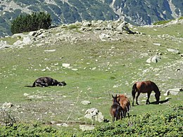 Pirin National Park 41.JPG