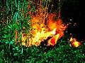 Piton Fournaise eruption 08 2004 01 enhanced.jpg