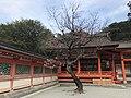 Plum tree and Heiden of Kashii Shrine.jpg