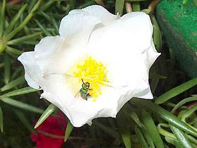 Pollination01.jpg