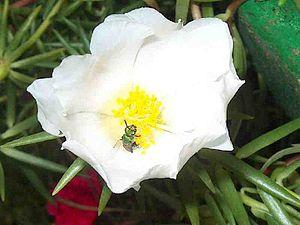 Pollination01