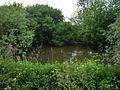 Pond, Blendworth - geograph.org.uk - 1321857.jpg