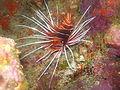 Port Ghalib march 2006-0158.jpg