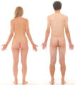 Posterior view of human female and male, without labels.png