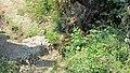 Potočić za zalivanje - panoramio.jpg
