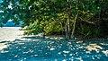 Praia da Fazenda, Unidade de Conservação Núcleo Picinguaba - Imagem 06.jpg