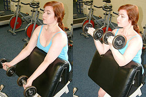 The supinated-forearm biceps curl is sometimes... - Free Weights Vs Exercise Machines