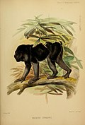 Proceedings of the Zoological Society of London (Mammalia Plate LXXXII) (7630029028).jpg