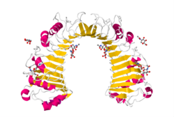Protein CD14 PDB 1WWL.png