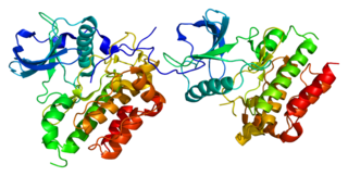 CD117 protein-coding gene in the species Homo sapiens