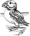 Puffin 2 (PSF).png