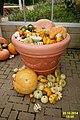 Pumpkin pot (SG) (16034401489).jpg