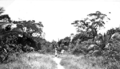 Queensland State Archives 5862 Road to village Yorke Island 20 July 1911.png