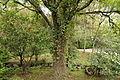 Quitos botaniska trädgård-IMG 9166.JPG