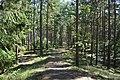 Rällaskogen,Rälla Tall 003.jpg